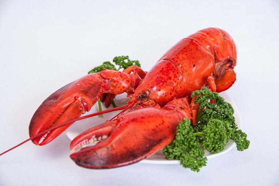 cuisson homard
